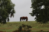 New Forest Sept 2018 (5)