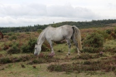 New Forest Sept 2018 (72)