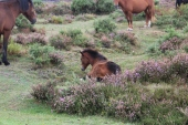New Forest Sept 2018 (75)