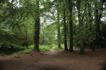 New Forest Sept 2018 a (6)