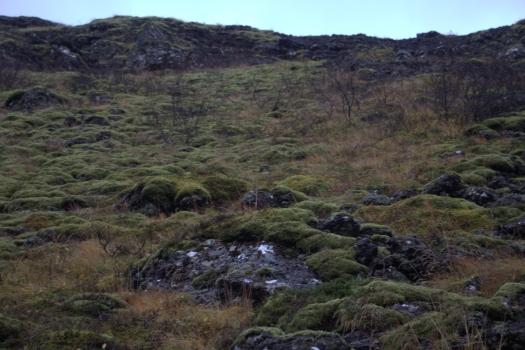 Iceland (403)