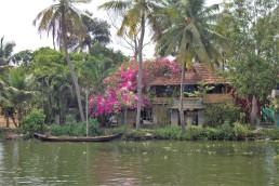 Alleppey backwaters (244)
