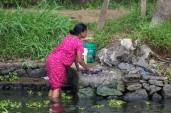 Alleppey backwaters (295)