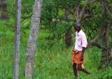 Alleppey backwaters (301)