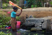 Alleppey backwaters (316)