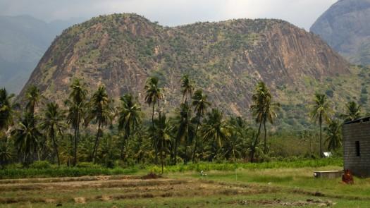 Munnar to Madurai (27)