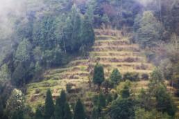 Darjeeling (135) (2)