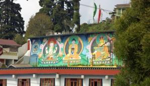 Darjeeling (229)