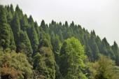 Darjeeling (524)