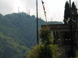 Darjeeling (533) - Copy