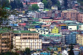 Darjeeling (555)