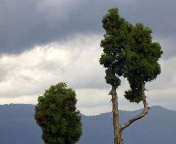 Darjeeling (572)