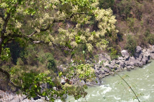Darjeeling to Gangtok drive (15)