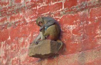 Varanasi (108)
