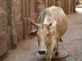 Varanasi (381)
