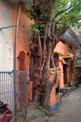 Varanasi (453)