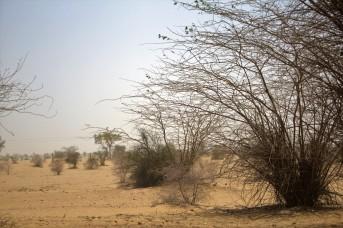 Jaisalmer (22)