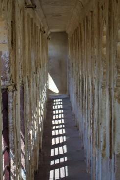 Jodhpur (219)