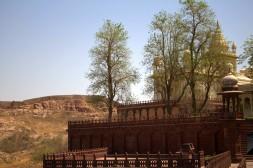 Jodhpur (311)