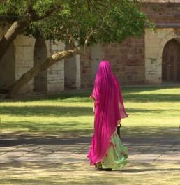 Jodhpur (490)