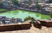 Jodhpur (519)