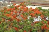 Udaipur (77)
